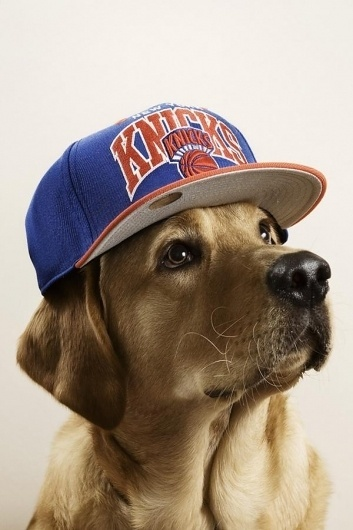 Dogs with caps | Cuded #caps #dogs