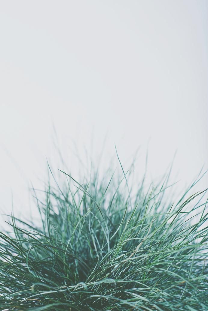 blue5.jpg #plants #photography #studio #foiliage #flowers