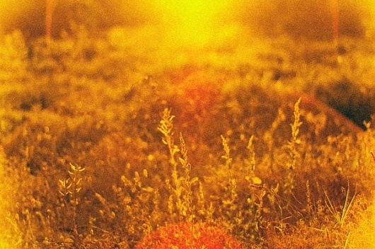 I'm different on the Behance Network #sun #photography #film