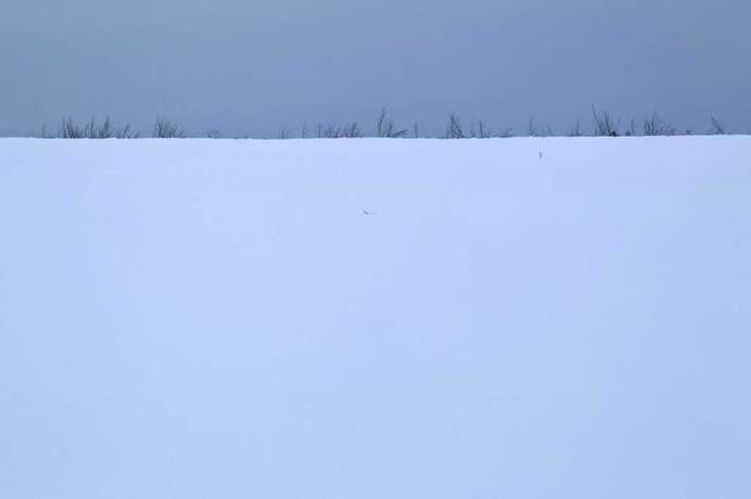 Light Frost by Francine Fleischer #inspiration #minimalist #photography