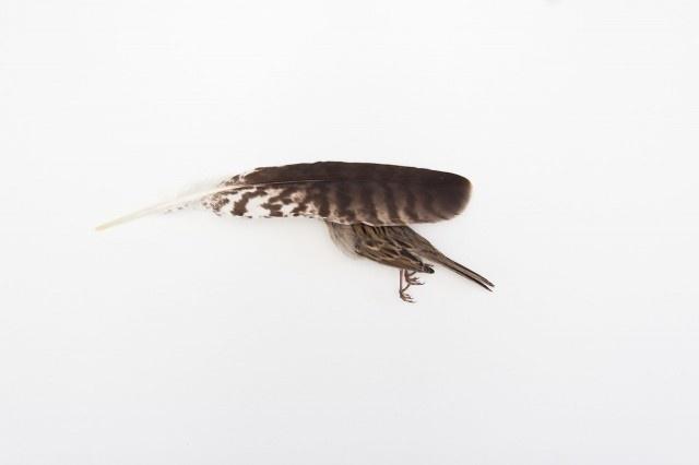 Still Life Photography by Kai Aragaki #inspiration #photography #still #life