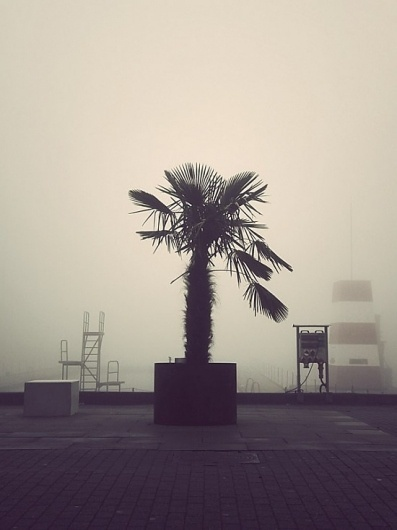 Deserted City | Fubiz™ #palm #fog #swim