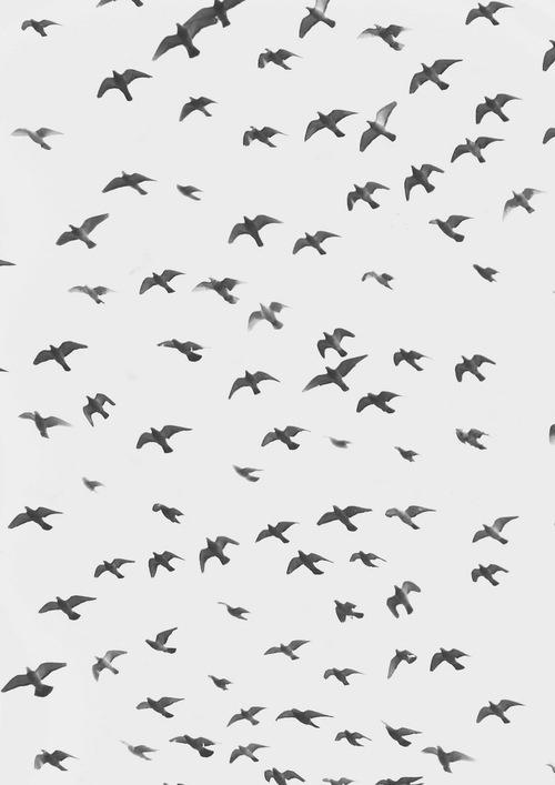 . #birds
