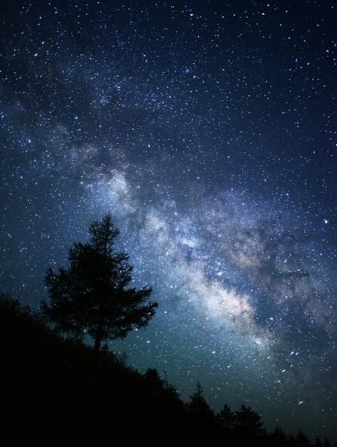 #sky#star#tree#photography