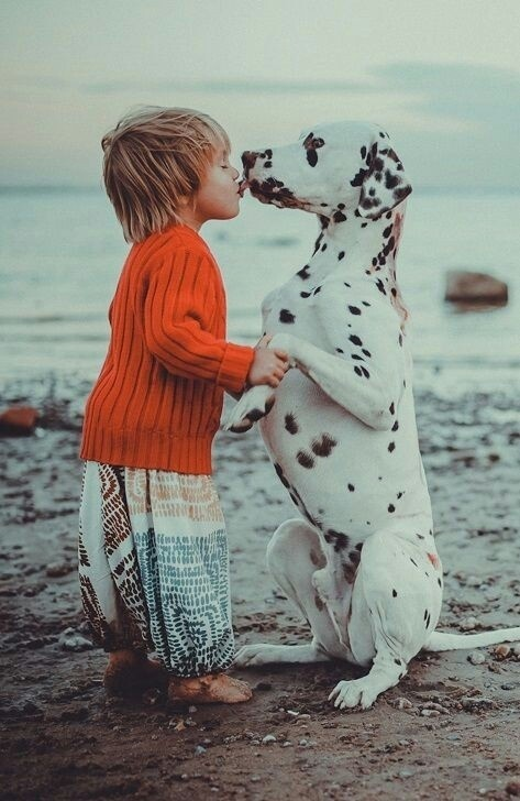 tjstupormundi: ♡|♡ on We Heart It. #friendship #companion #child #dalmation #kiss #photography #cute #beach #love #dog