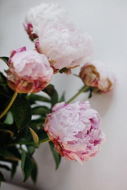 Tumblr #flower