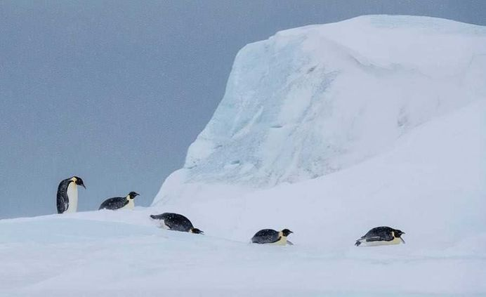 Franka Slothouber Captures The Emperor Penguin Colony in Antarctica