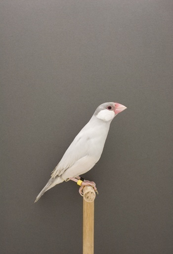 bird #photography #bird
