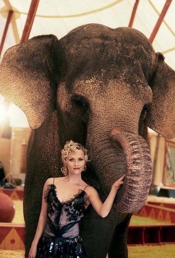 Jonas Eriksson » Every Reason to Panic #reese #witherspoon #elephant