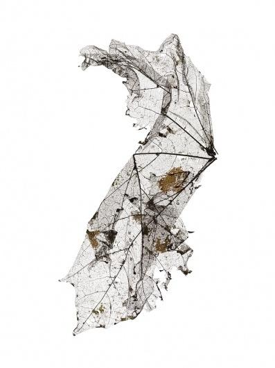 At This Rate « Studio8 Design #leaf #close #organic #up #macro #detail