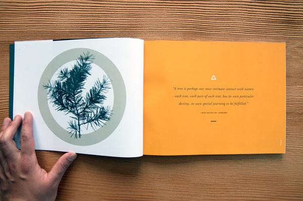 amber book #book
