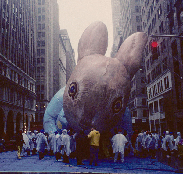 by stevensiegel260 #big #rabbit #installation