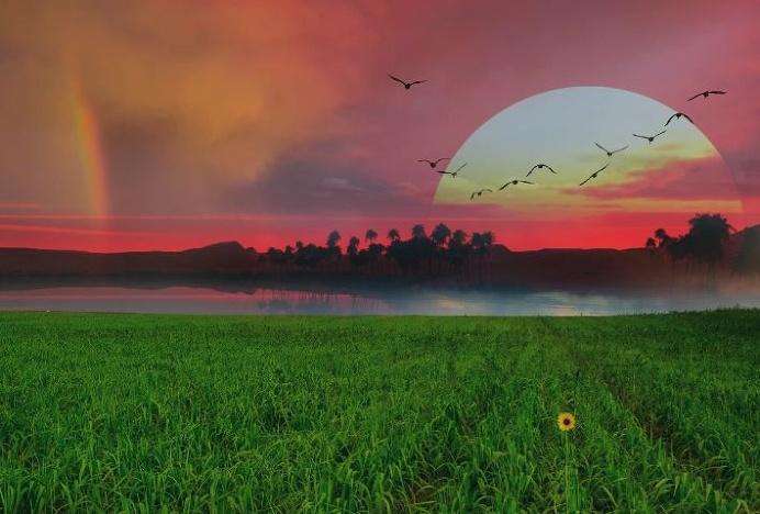 #sunset#Nature#outdoors#birds#green#grass