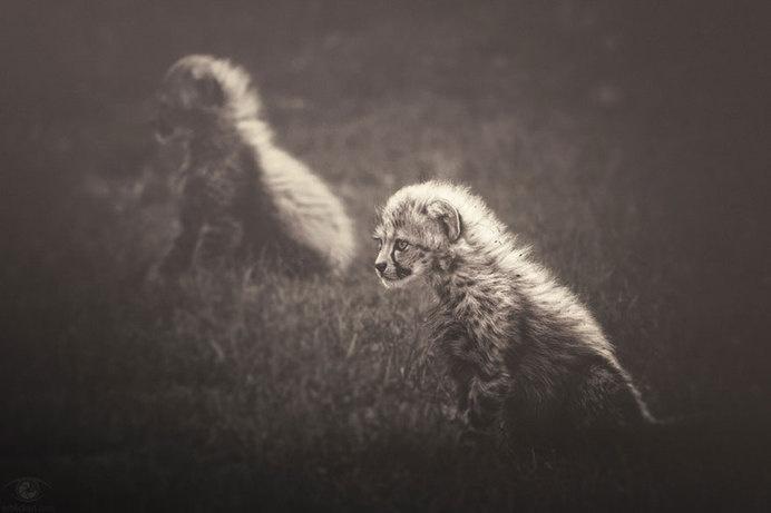 africa-souls-zoo-photography-manuela-kulpa-2 #photography #animals