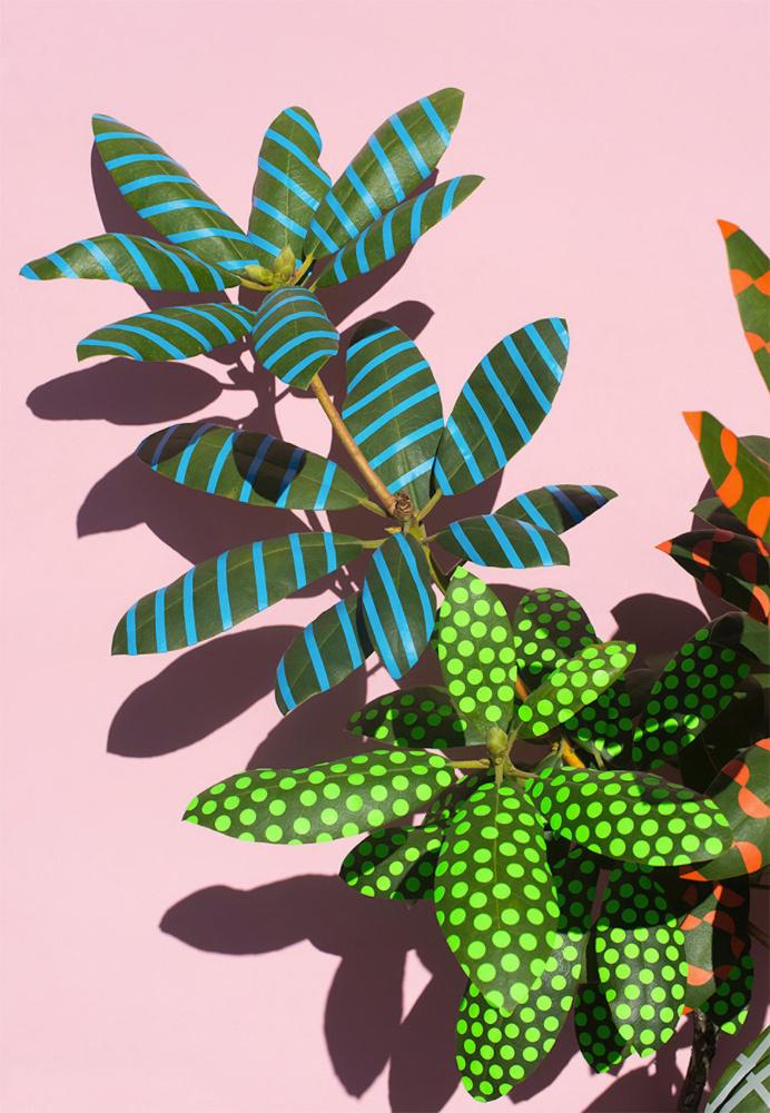 Wonderplants Art Project