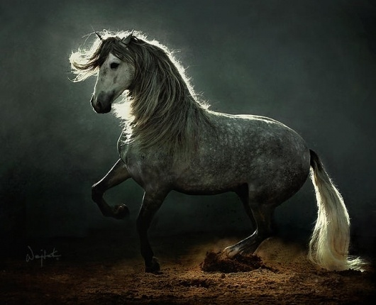 Stunning Horse Photography by Wojtek Kwiatkowski | Abduzeedo | Graphic Design Inspiration and Photoshop Tutorials #photography #horse