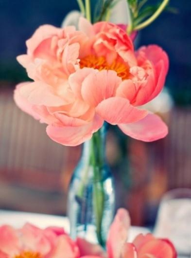Sara Lindholm #pink #flower