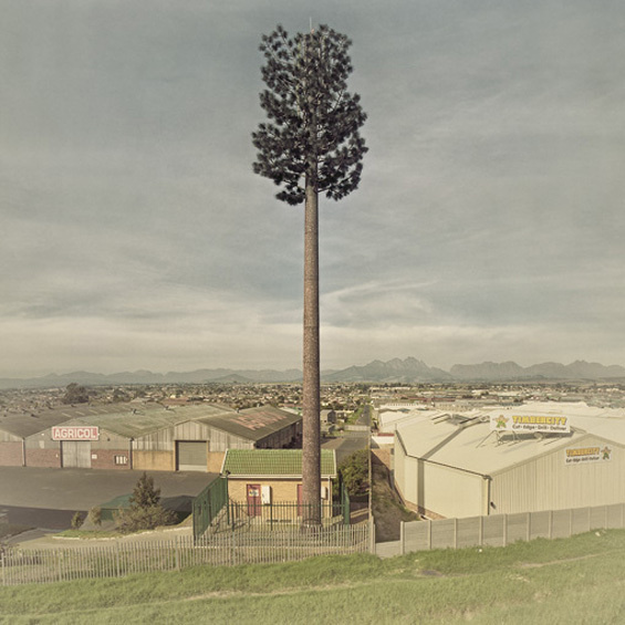 Cell phone towers disguised as trees by South African artist Dillon Marsh #tree #tower #art