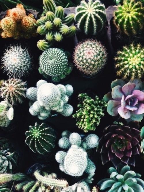 good things #cactus