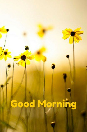 Time to Start the Day: Good Morning Images - Good Morning