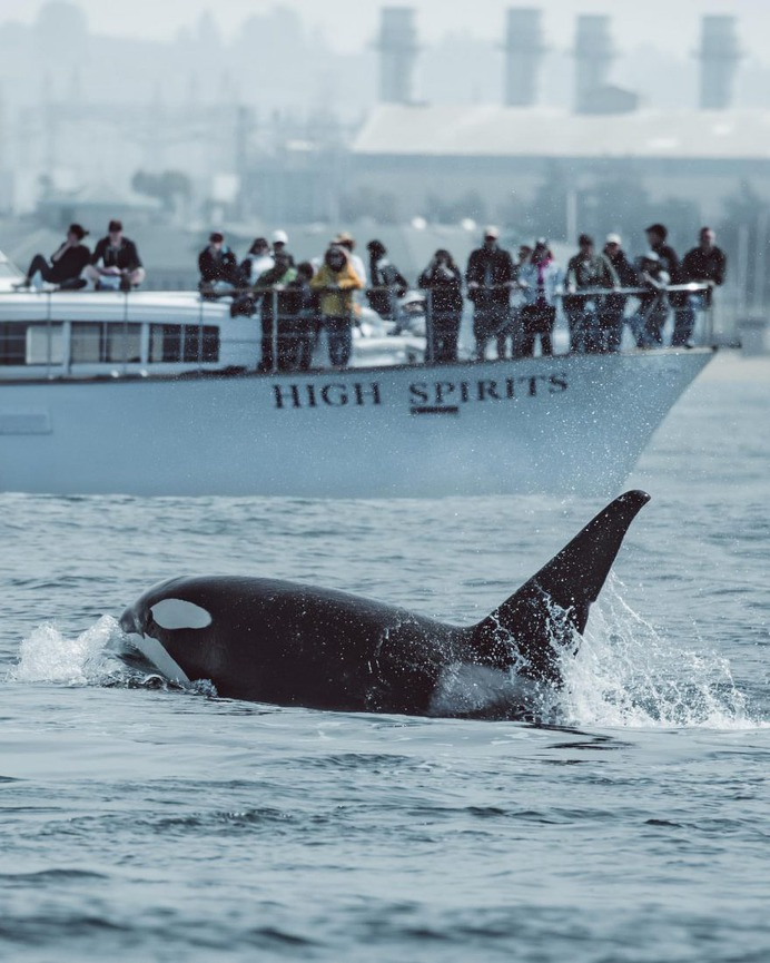 Slater Moore Captures Majestic Pictures of Whales in Monterey Bay