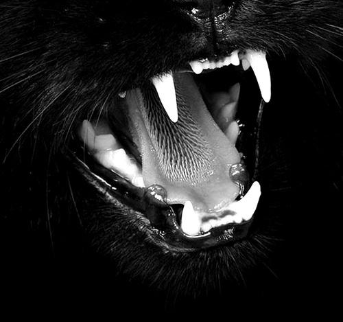 Rrrrrh. #animals