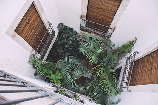 Freunde von Freunden Carolina Iriarte palms #interior #design #decor #deco #decoration