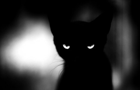 FFFFOUND! #white #cat #black #photography #and
