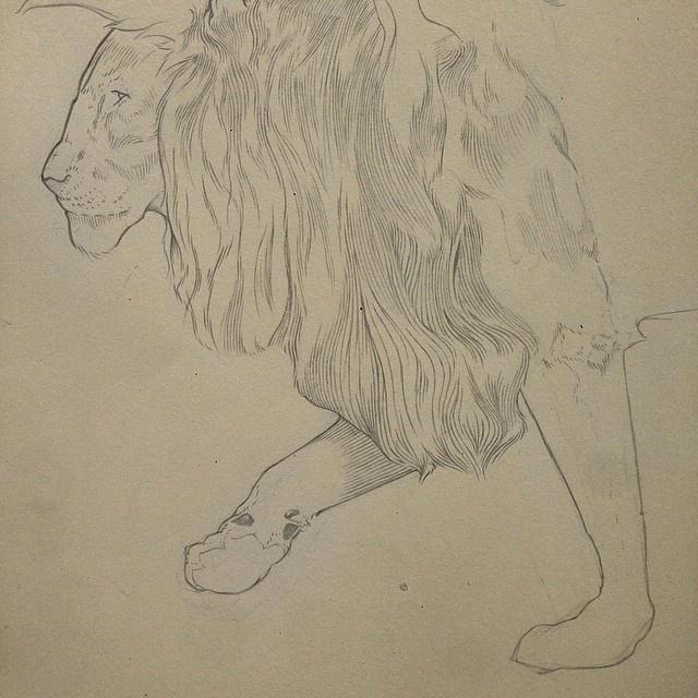Pencil, Sketch, Illustration, Lion, Micheal Hanly