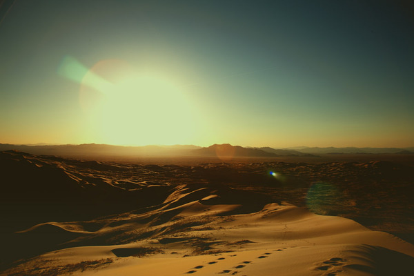 mojavedesertweb #photography #mojave #desert