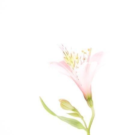 MA16 #flower #photography