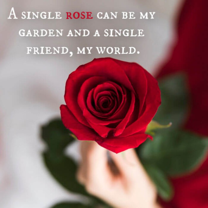 rose day 2020 messages