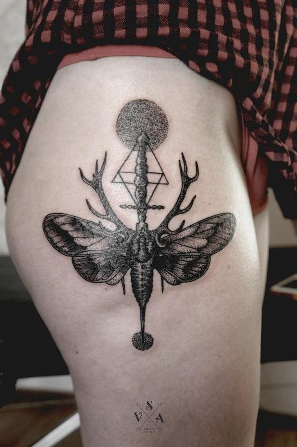 Pinned Image #moth #antler