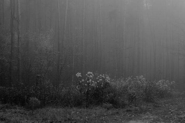 Arcademi_Gesine_Hennig_11 #white #hennig #black #photography #and #gesine