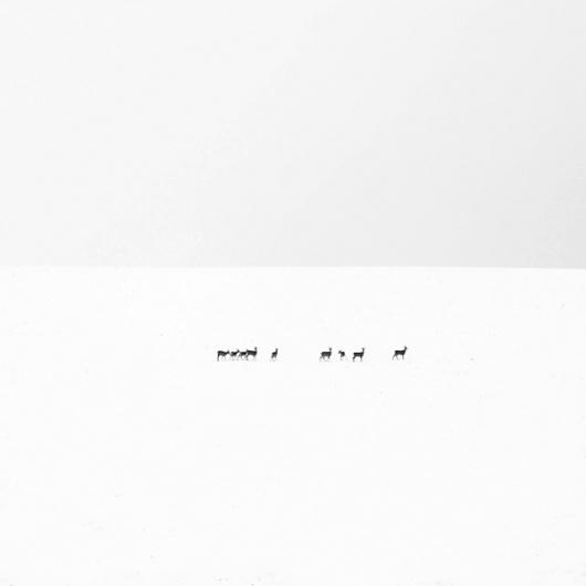 White #white #major #akos #photography #minimal