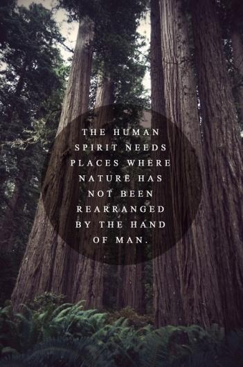 tumblr_m1m7tjbB6R1qazj6vo1_500.jpg (498×750) #truth #trees