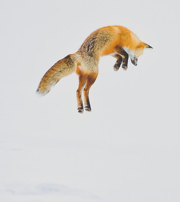 Foxy. #animals