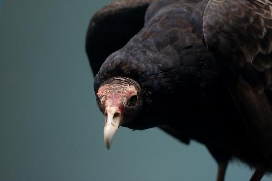 Paul Octavious - Yale Peabody #photography #bird