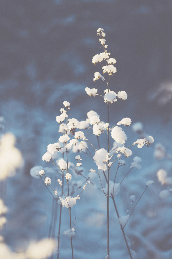 White & light - Winter Photography by Nina Lindfors #snow #nature #photography #vintage #winter