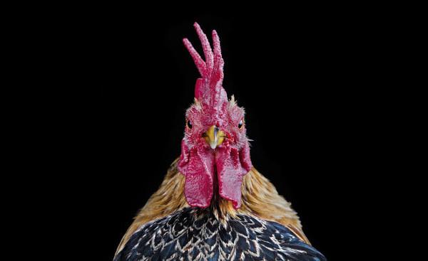 Ernest Goh #inspiration #photography #animal