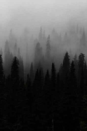 tumblr_lb9pxv3rhj1qz7lxdo1_500.jpg (467×700) #white #tree #woods #noir #black #and