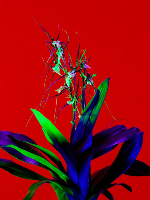 Torkil Gudnason | PICDIT #red #photo #color #photography #art #flowers