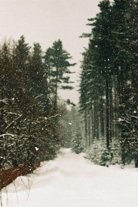 tumblr_muy4i8Lxuu1sjs8dfo1_500.jpg (480×719) #path #forest #snow #winter