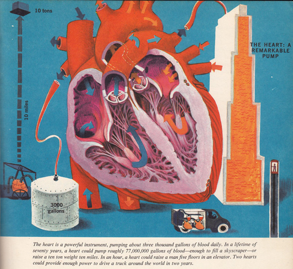 The Human Body: What It Is and How It Works, in Vibrant Vintage Illustrations circa 1959 | Brain Pickings #heart #illustration #infography #anatomy