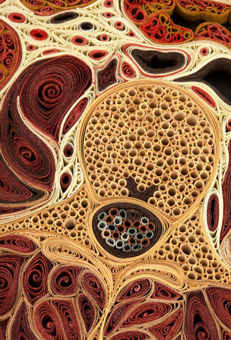 Anatomical Cross Sections Made with Quilled Paper by Lisa Nilsson | Colossal #papercraft #paper #art