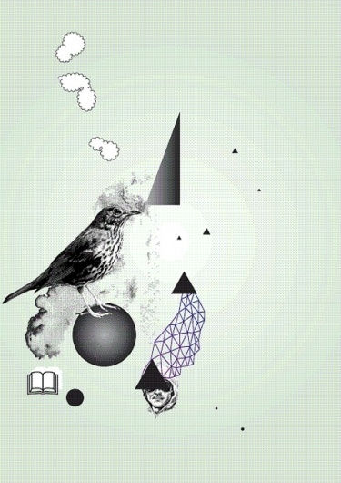 vogel | Flickr - Photo Sharing! #bird