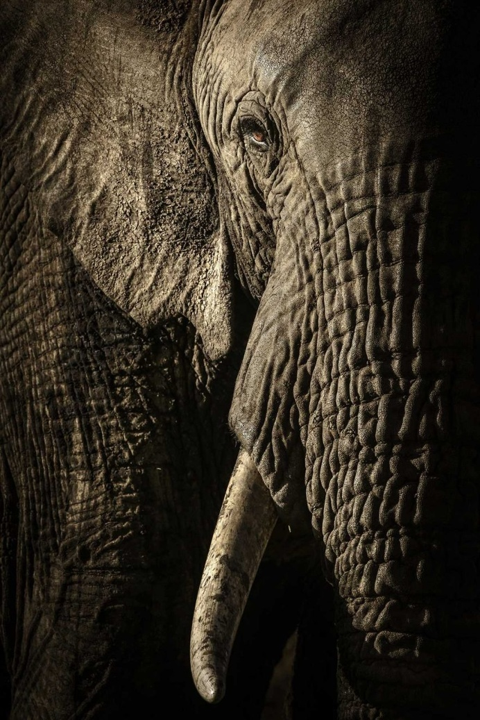 The power of the matriarch by David Lloyd