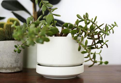 image #planter #plant #green