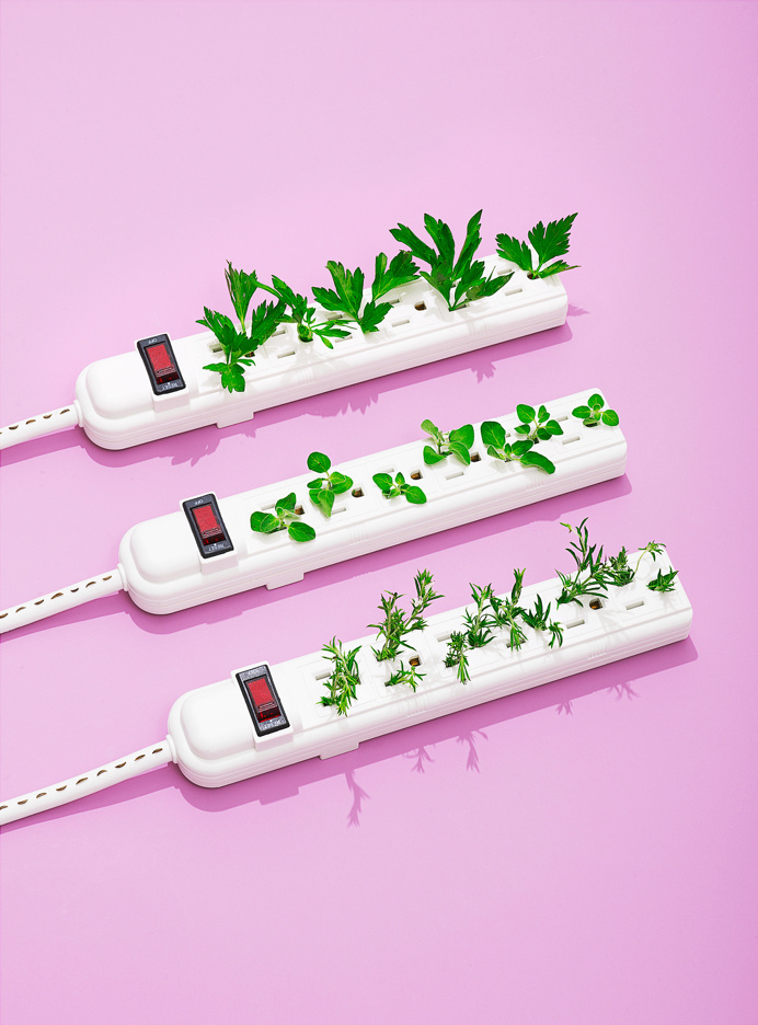 power strip, green, growth