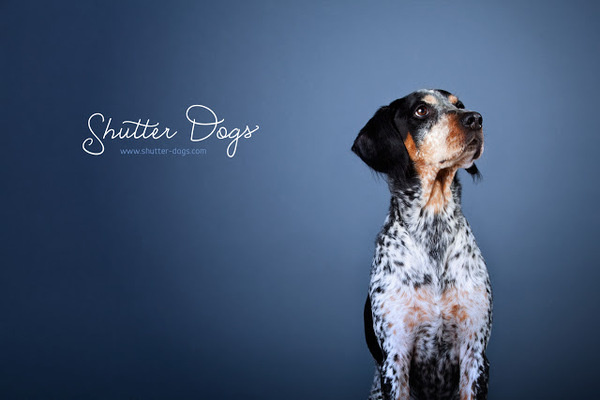 Wednesday, February 6, 2013 #gigov #from #tony #portraits #animal